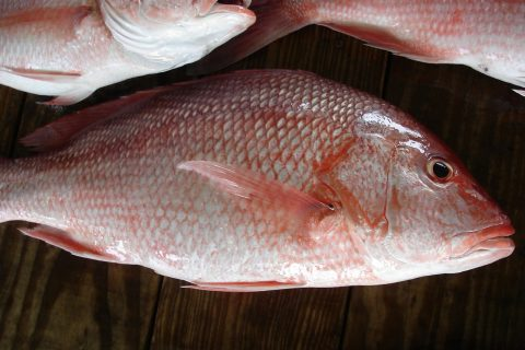 You can catch red snappers near our Destin FL vacation rentals!
